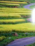 2009_12090011.JPG